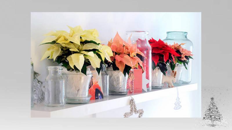 3 Ideas para decorar tu hogar con poco presupuesto